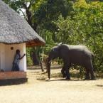 Un moyen unique d'économiser votre argent lors d'un Safari Africain'