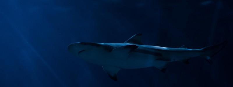 Safari sauvage pour les animaux rares: requins, paresseux, koalas