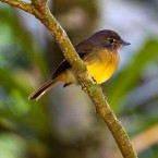 The Best Bird Watching Experiences That You Must Not Miss In Costa Rica