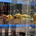 The Cradle of Humankind...a place every tourist  should visit in South Africa