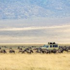 What you need to know about Safari's in Africa