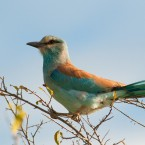 Discover These Top 5 Birding Spots On Your Trip To South Africa