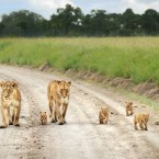 Hot safari destinations in African