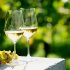 German Wines: Winery Tour to German Riesling