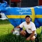 Работа в Швеции – разрешение на работу и вакансии