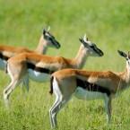 Частные экскурсии: Африканское Сафари