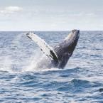 Лучшие сафари туры в поисках редких животных: киты, розовые дельфины и скаты