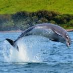 Dingle: La belleza del mar a orillas de la montaña