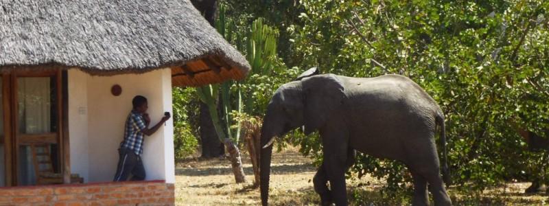Formas únicas para ahorrar dinero durante su Safari en África