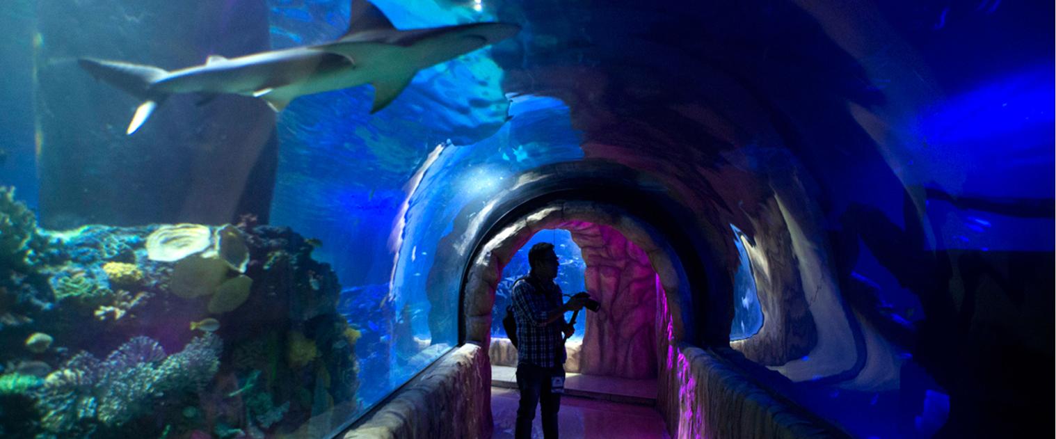 Acuario, que se encuentra entre los 8 más visitados del mundo y el más grande de Latinoamérica