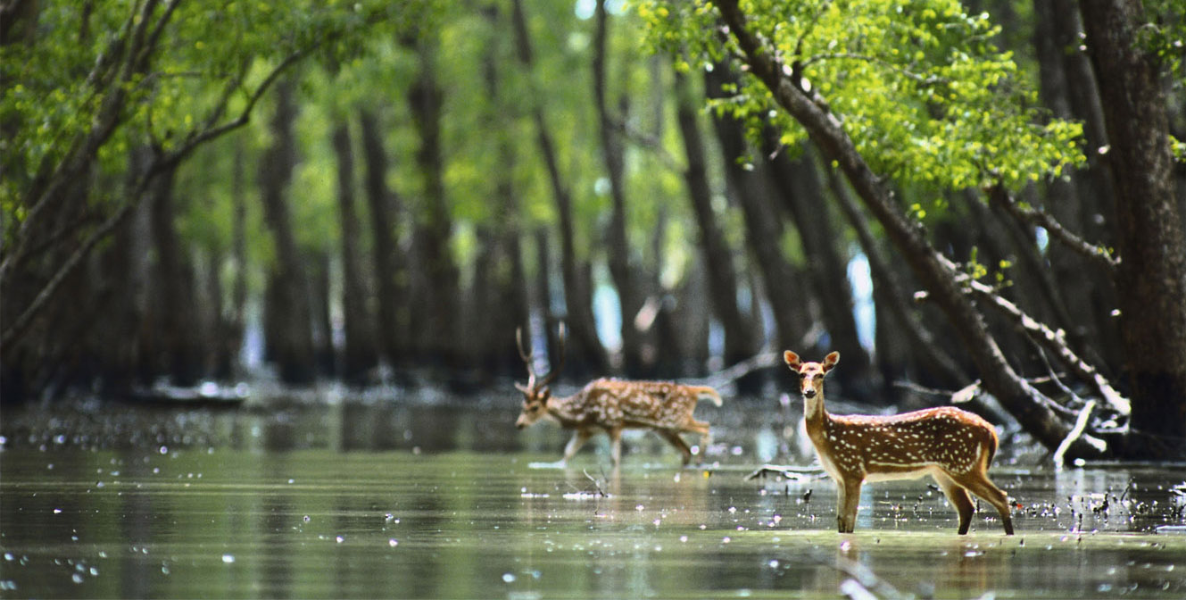 Why Sundarbans